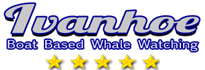 Whale Watching Hermanus - South Africa