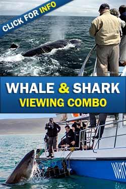 Whale-Shark-combo-small